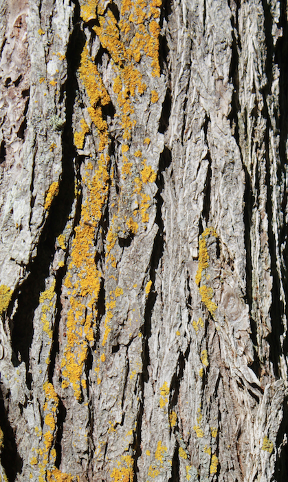 textures tree bark lichen