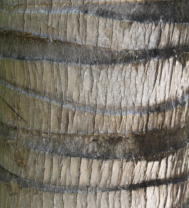 bark of a tree trunk in Mexico