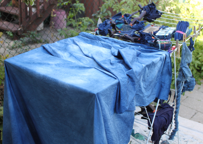 Indigo bundles and fabric drying