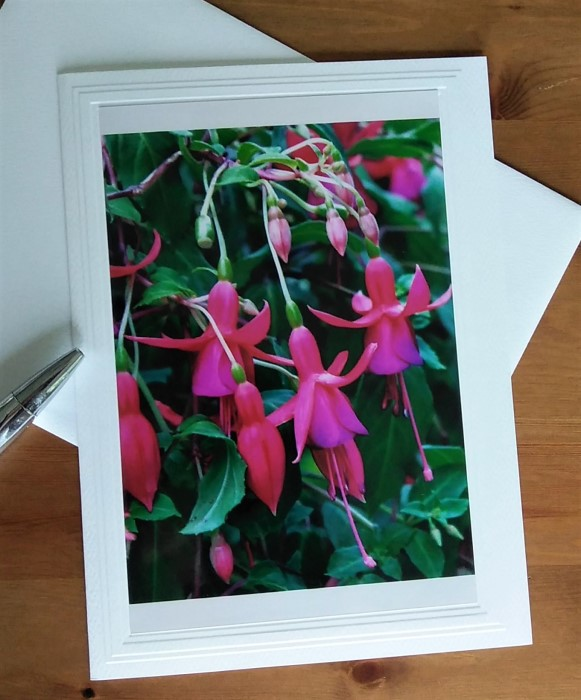 photograph of fuchsias by doris lovadina-lee on blank note cards