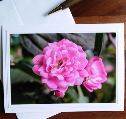 flower photography on blank greeting card