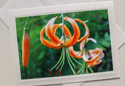blank card with tiger lily photo on front by doris lovadina-lee