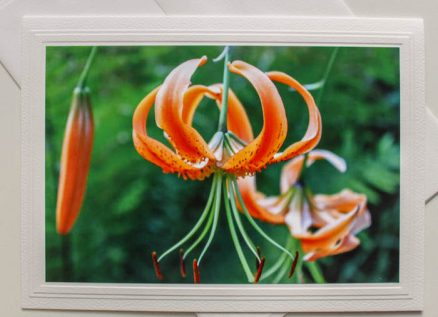 Tiger Lily flower photographed by doris lovadina-lee blank greeting card